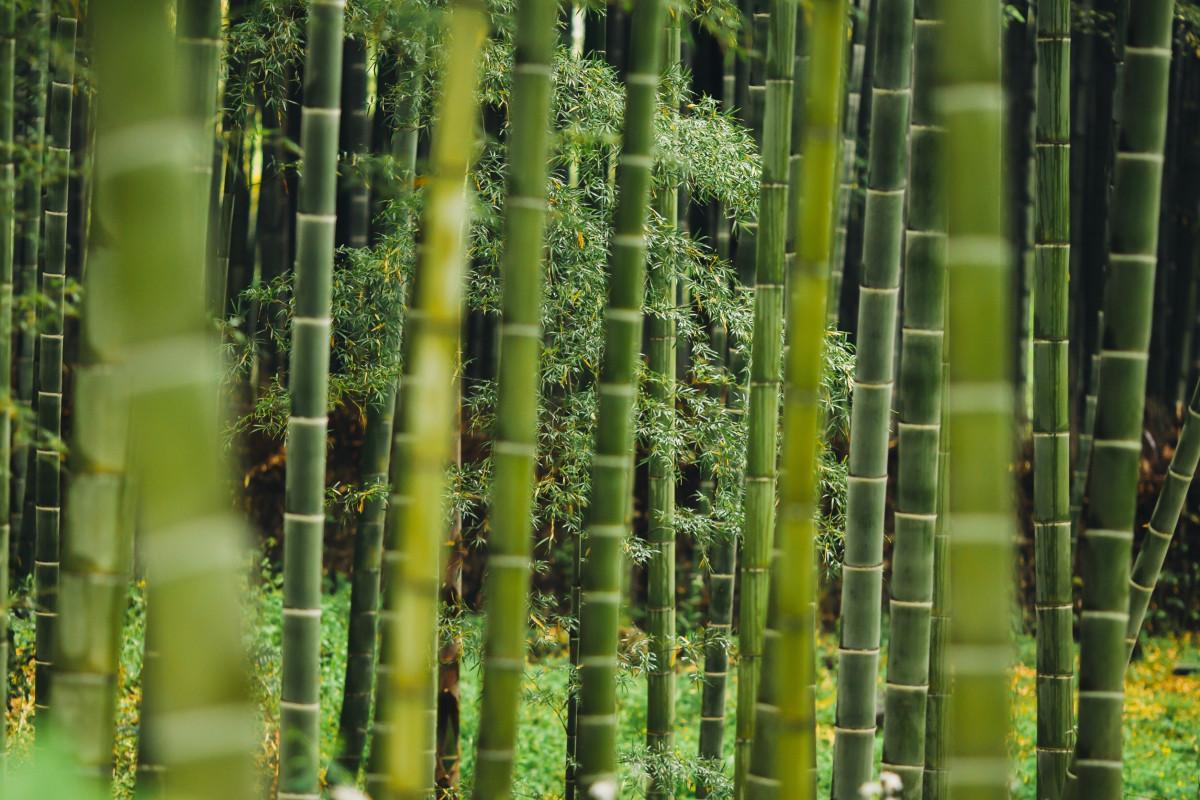 Fotos gratis rbol bosque c sped rama crecimiento for Arboles para plantar en verano