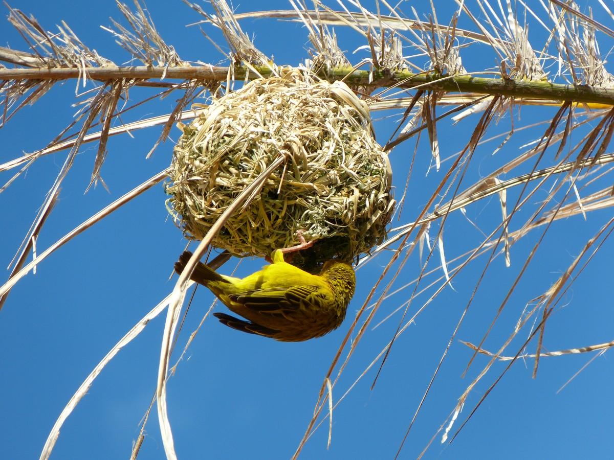картинки гнезда птиц на дереве хоронят