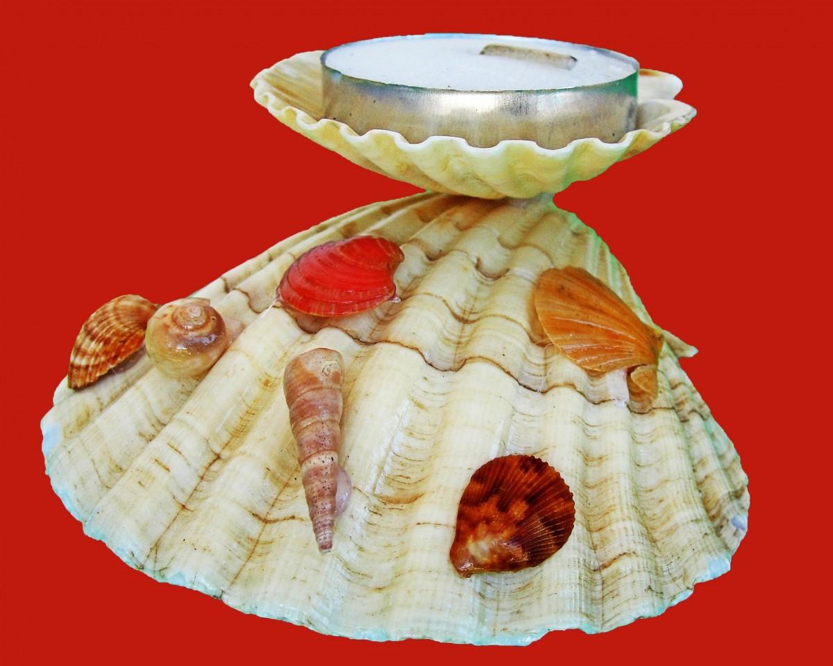 картинки блюд из раковины очень много разных