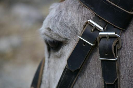 noir et blanc,ferme,prairie,animal,fourrure,cheval