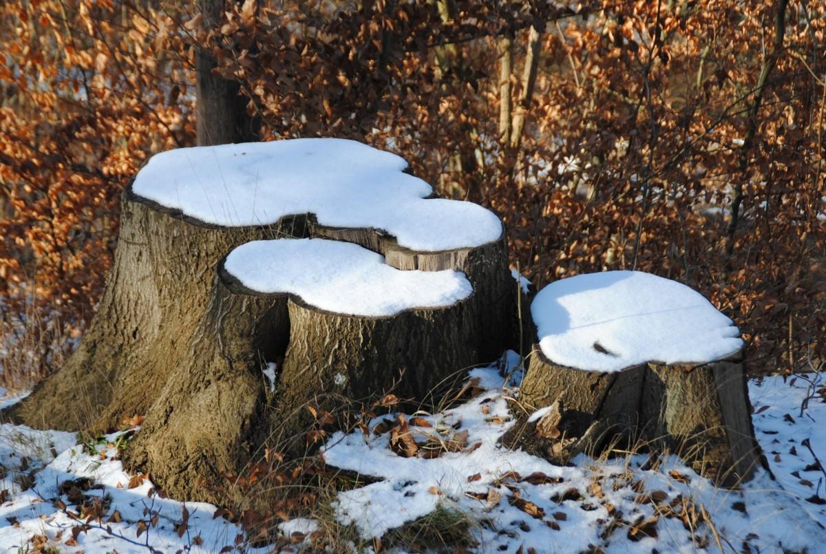 картинка деревья пенечки поженилась