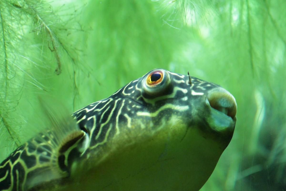 Kostenlose foto meer ozean tier unterwasser for Fische halten