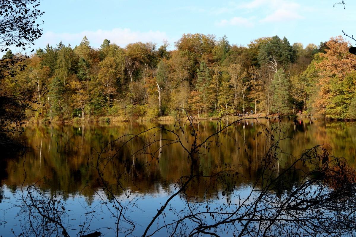 Obrazy krajina strom voda pr roda les mo iar for Habitat stuttgart