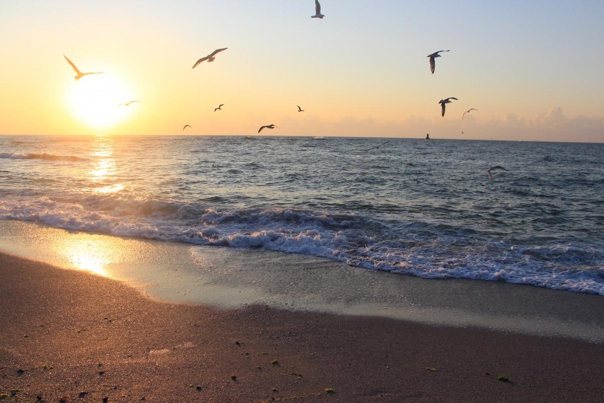 Free Images : beach, coast, sand, ocean, horizon, bird
