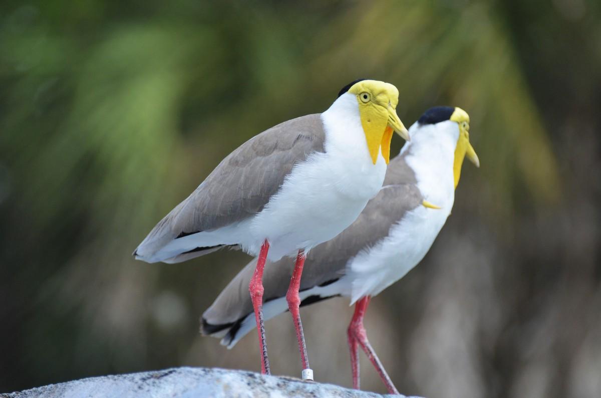 Images gratuites la nature oiseau faune zoo le bec for Oiseau par la couleur