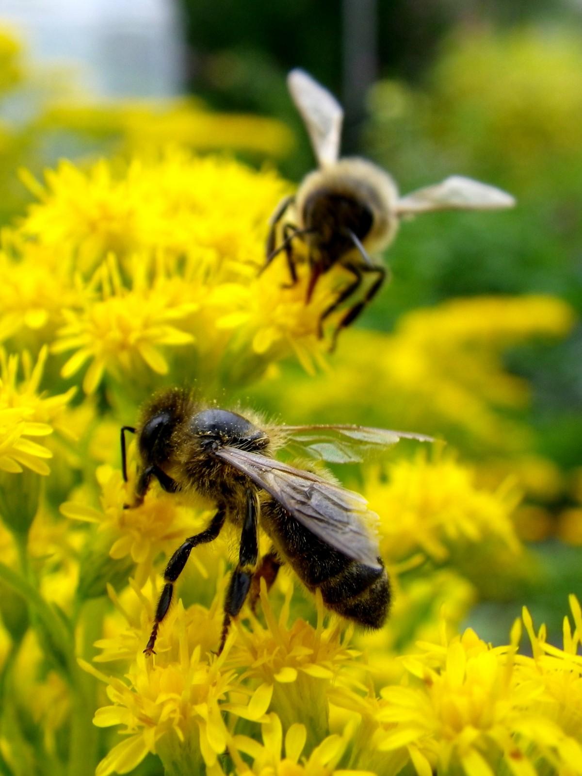 это огромная картинки с изображением пчел майонезе можно приготовить
