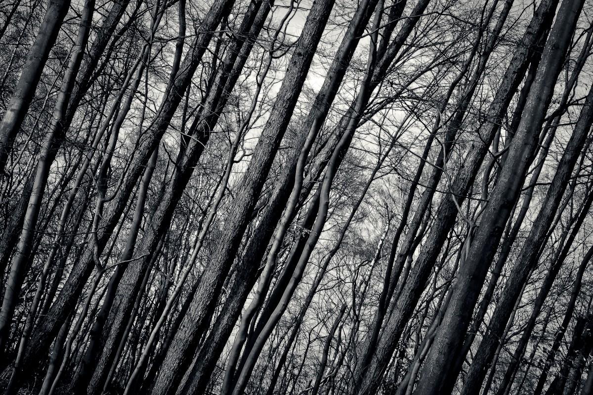 Free Images Landscape Tree Nature Snow Winter Black
