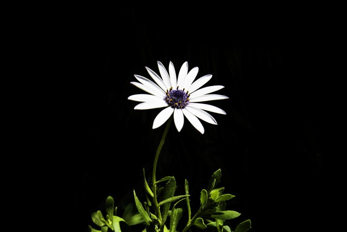 Immagini belle fiorire bianco e nero fiore petalo for Foto hd bianco e nero