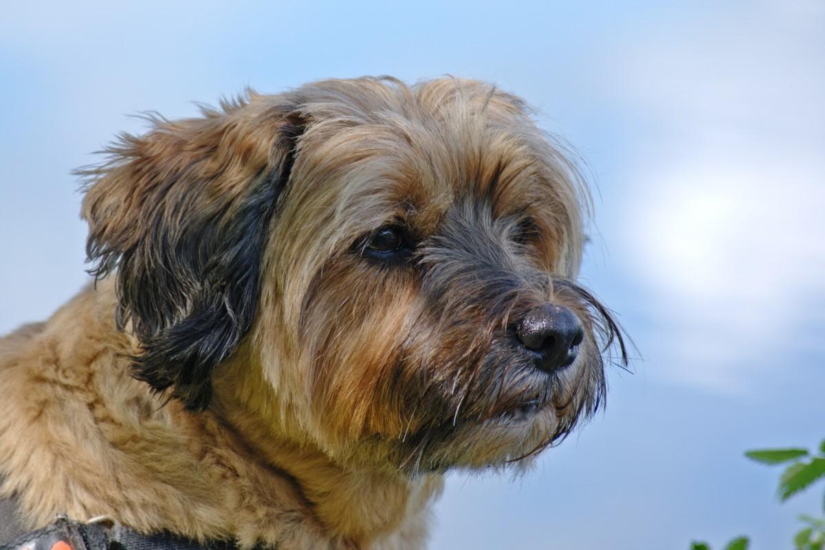 Free Images View Animal Profile Pet Portrait Haircut Head