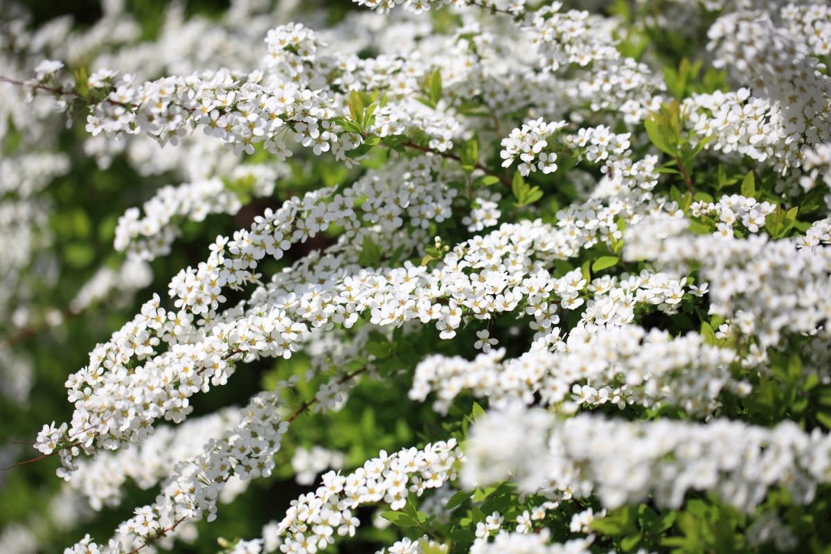Images gratuites herbe prairie prairie fleur haute for Plante herbe haute