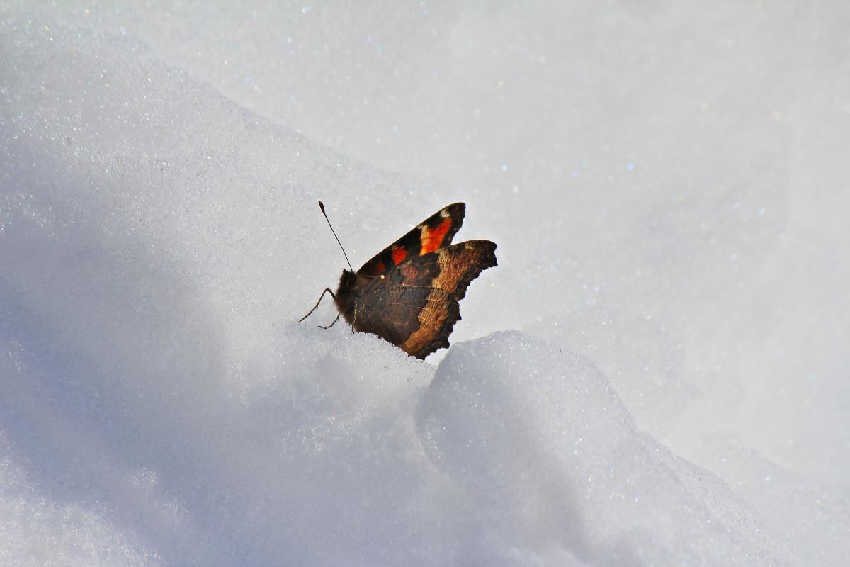Зимняя бабочка картинки