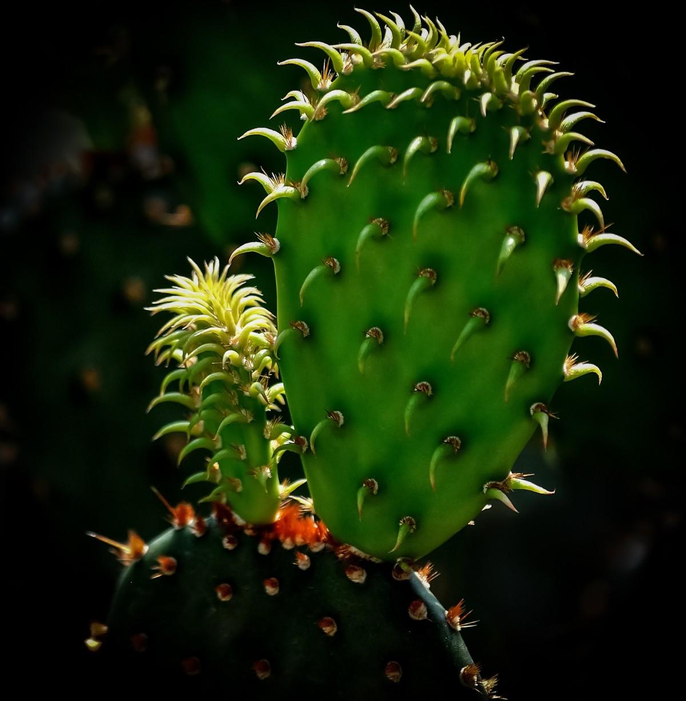 naturlig pik vækst