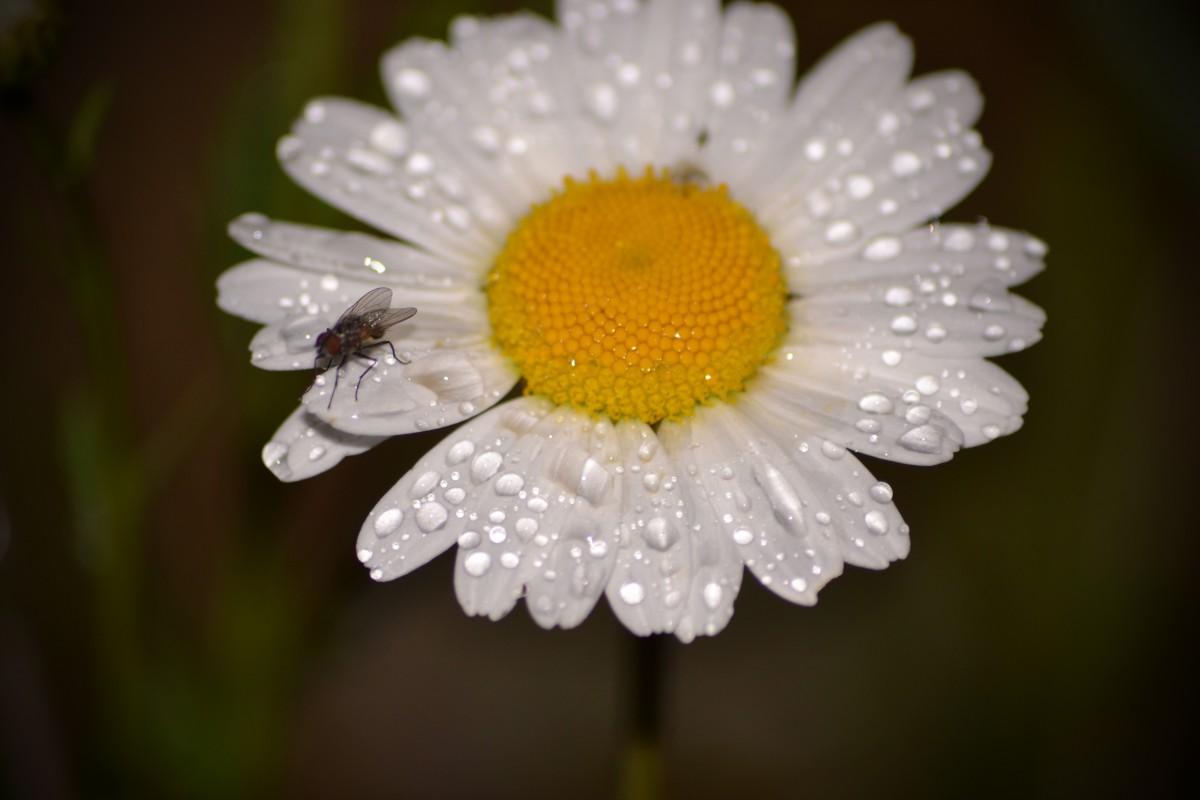 Free Images : nature, blossom, white, flower, petal ...