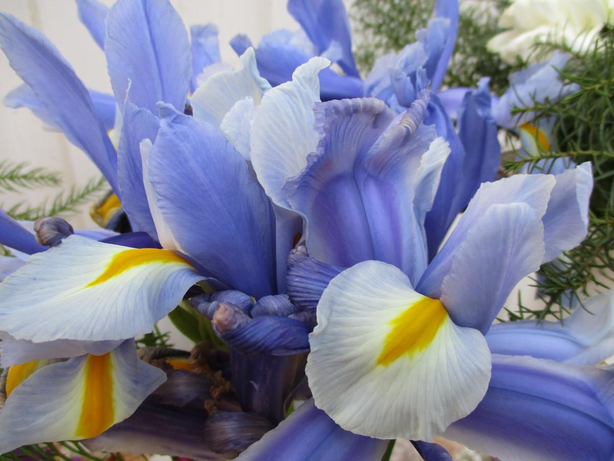Free Images Nature Flower Petal Bloom Summer Bouquet Spring