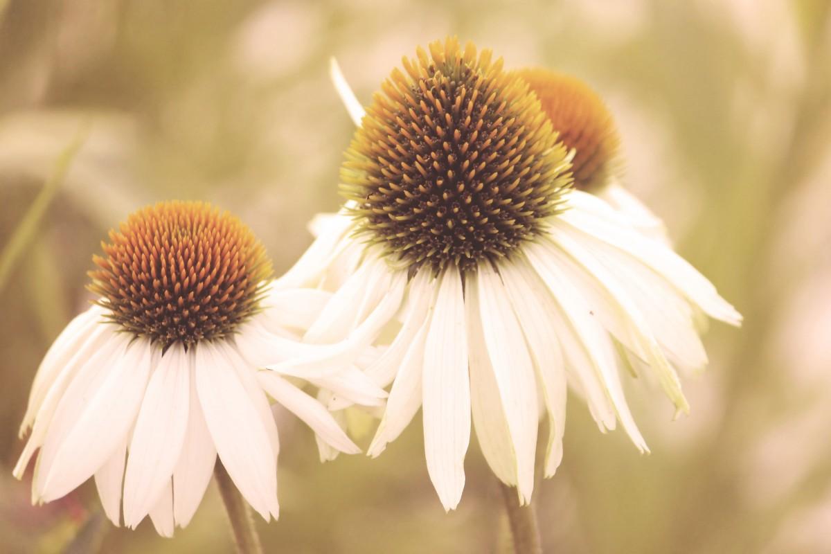 Vintage Retro Flower Photography