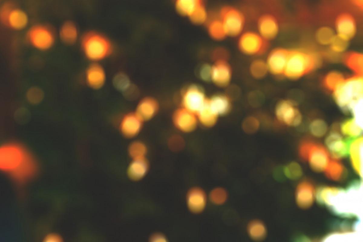 light bokeh sunlight flower petal sparkler decoration blurred christmas lighting illuminated christmas decoration lights christmas lights - Blurred Christmas Lights