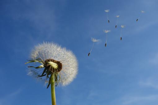 nature,grass,plant,cloud,sky,field