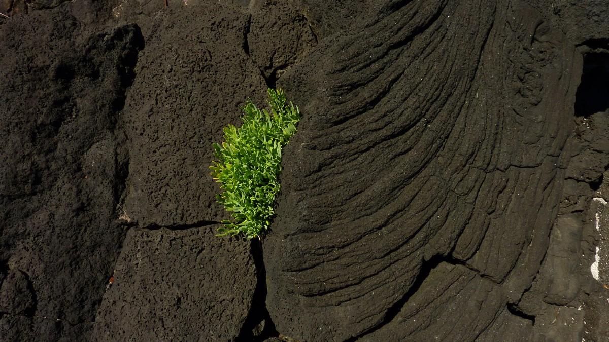 картинки про плодородие почвы возле вулканов самой