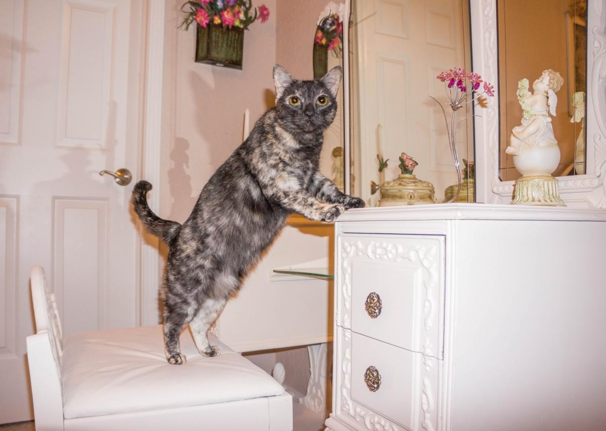 น่ารัก มอง สัตว์เลี้ยง ขนสัตว์ แนวตั้ง หนุ่มสาว ลูกแมว แมว แมว โรคสะเก็ดเงิน สัตว์เลี้ยงลูกด้วยนม เฟอร์นิเจอร์ ห้องพัก ขี้เล่น สนุก คิตตี้ ตลก ในประเทศ น่ารัก แมวน่ารัก สัตว์น่ารัก tortie แมวขนาดเล็กถึงขนาดกลาง แมวเหมือนสัตว์เลี้ยงลูกด้วยนม