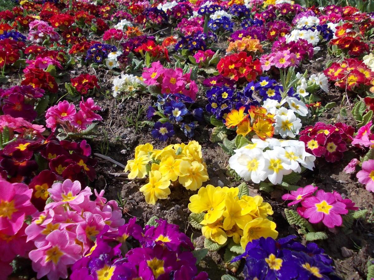 Fotos Gratis Paisaje Naturaleza Macro Vistoso Flora