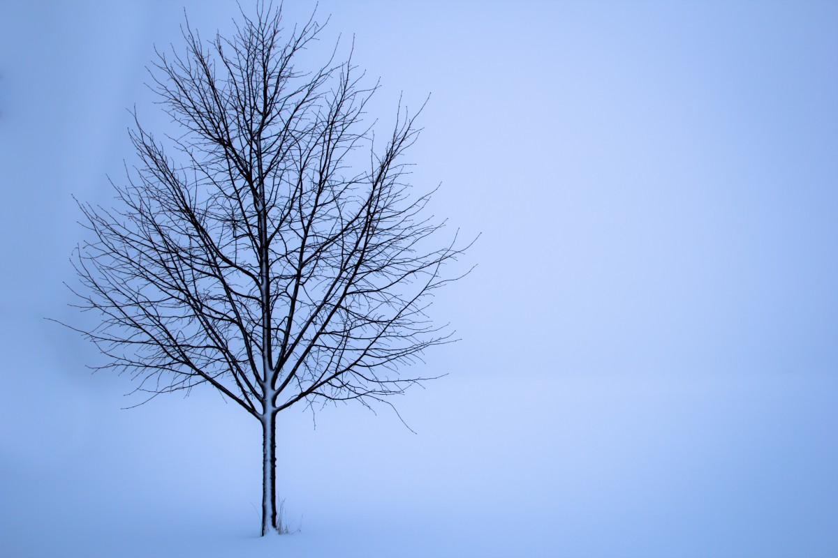 Free Images Landscape Nature Branch Snow Cold