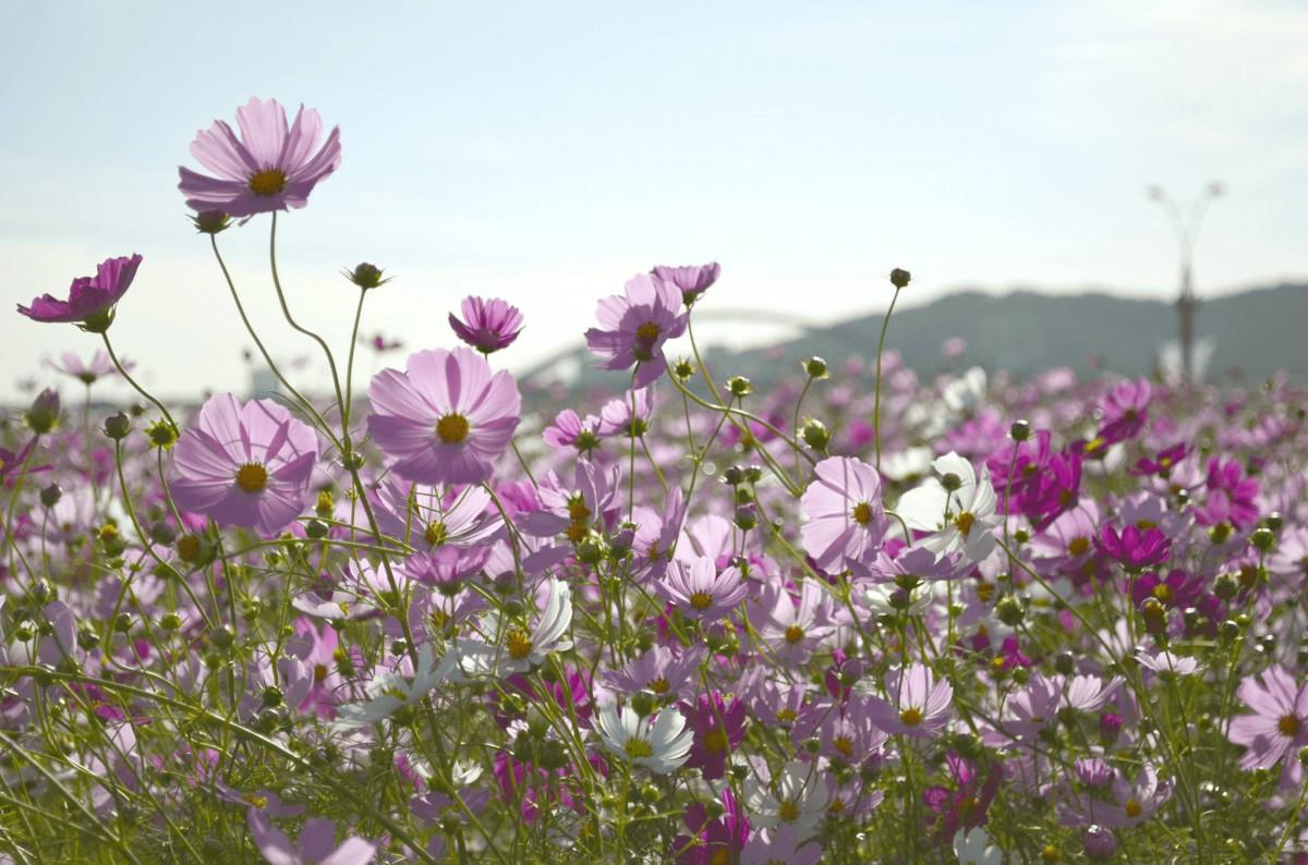 Αποτέλεσμα εικόνας για photography wildflowers scenery autumn