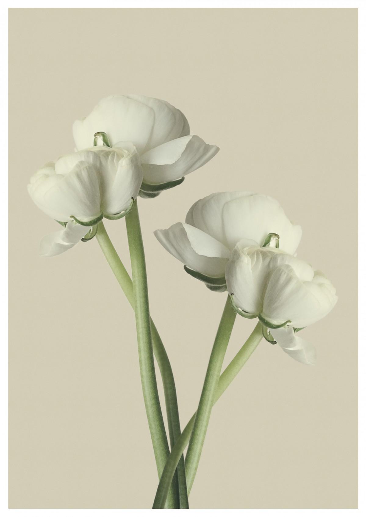 mekar menanam putih bunga daun bunga berkembang