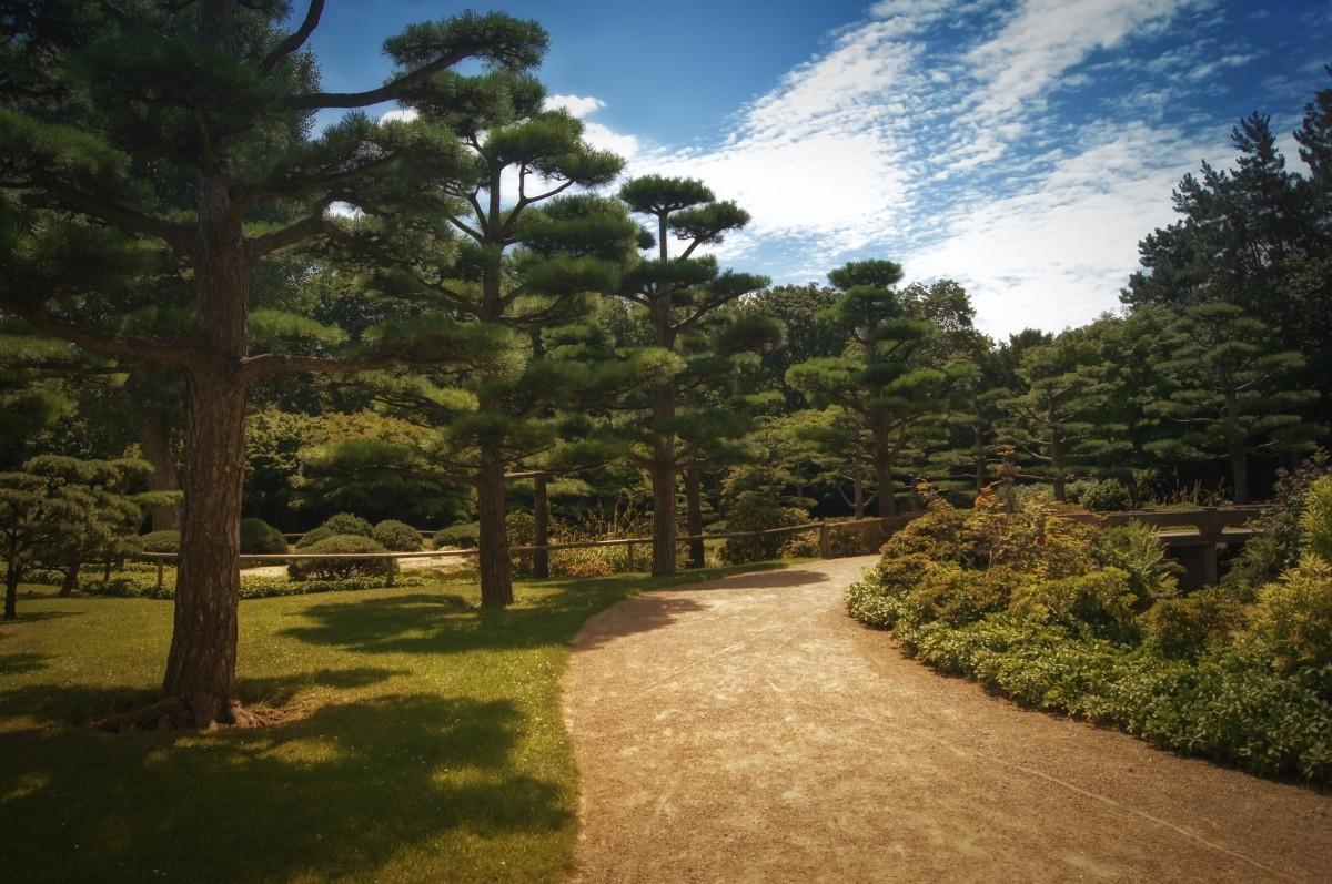 Gambar : pohon, jejak, halaman rumput, hijau, botani, biru