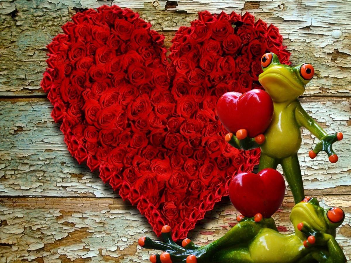 images gratuites arbre la nature for t plante fleur amour c ur rouge couleur l. Black Bedroom Furniture Sets. Home Design Ideas