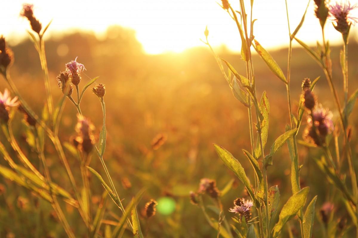 Картинки доброе утро рассвет лето цветы