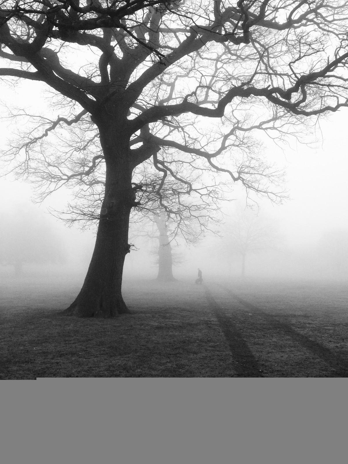 Black And White Misty : Gratis afbeeldingen landschap boom natuur bos pad