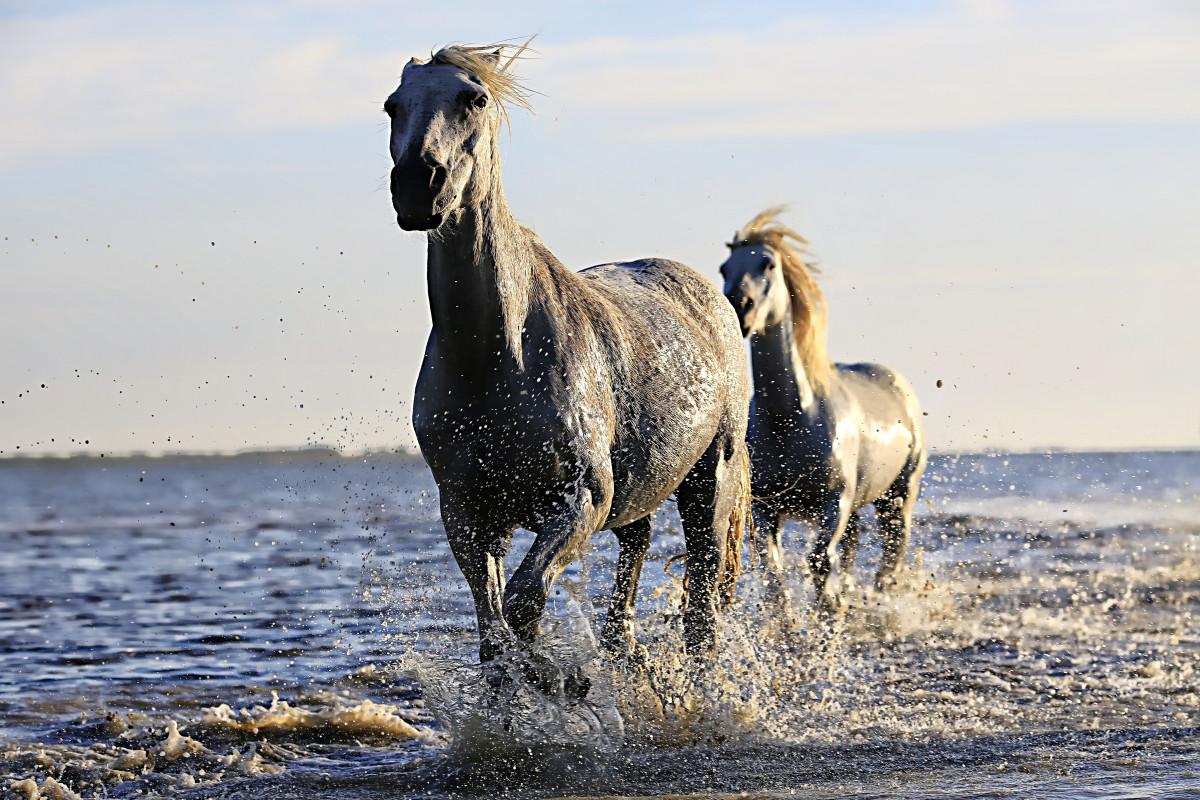Миллер интерпретировал сны с конями по цвету животных.