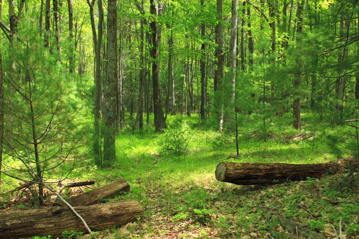 картинки разного леса там, родном