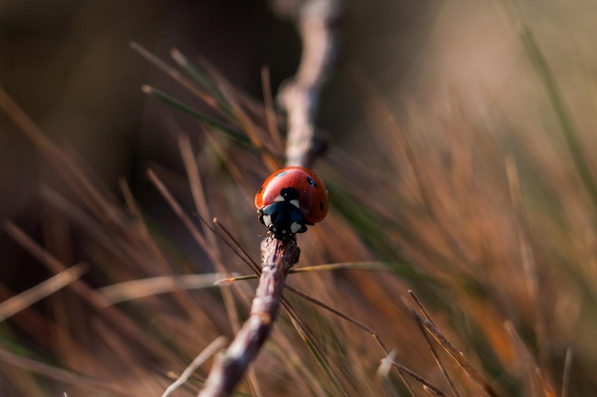 Kostenlose Foto Natur Gras Ast Weiß Fotografie Blatt Blume