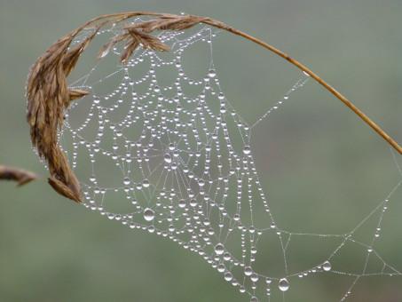 Hämähäkki Fobia