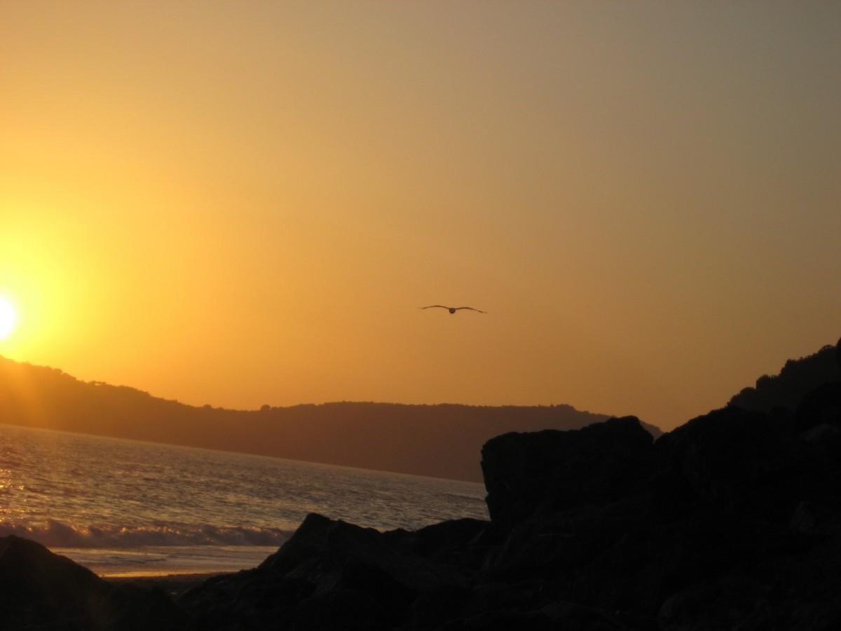 free images   sea  horizon  bird  sun  sunrise  sunset  sunlight  morning  dawn  animal  seagull