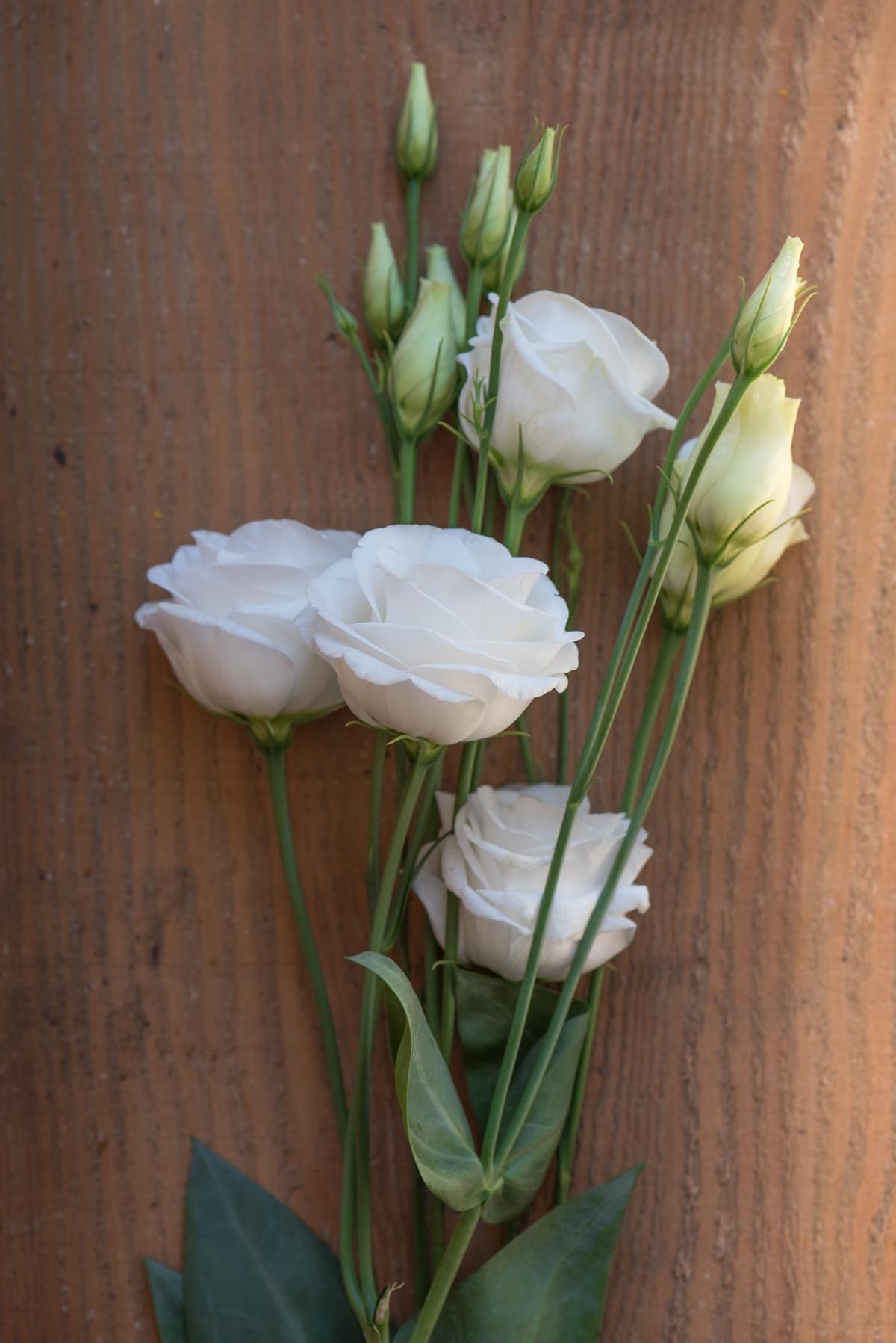kostenlose foto bl hen holz wei s sonnenlicht bl tenblatt tulpe schlie en flora. Black Bedroom Furniture Sets. Home Design Ideas