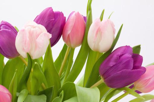 Verjaardag Bloemen Gratis Afbeeldingen Mooie Afbeeldingen Pxhere