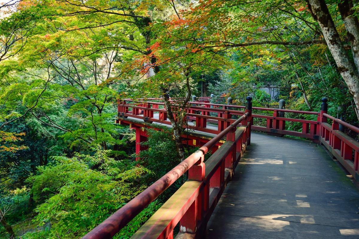 Fotos gratis paisaje rbol planta madera puente for Arbol rojo jardin