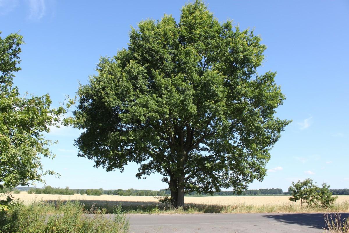 Fotos gratis paisaje la carretera verano hojas for Arboles para plantar en verano