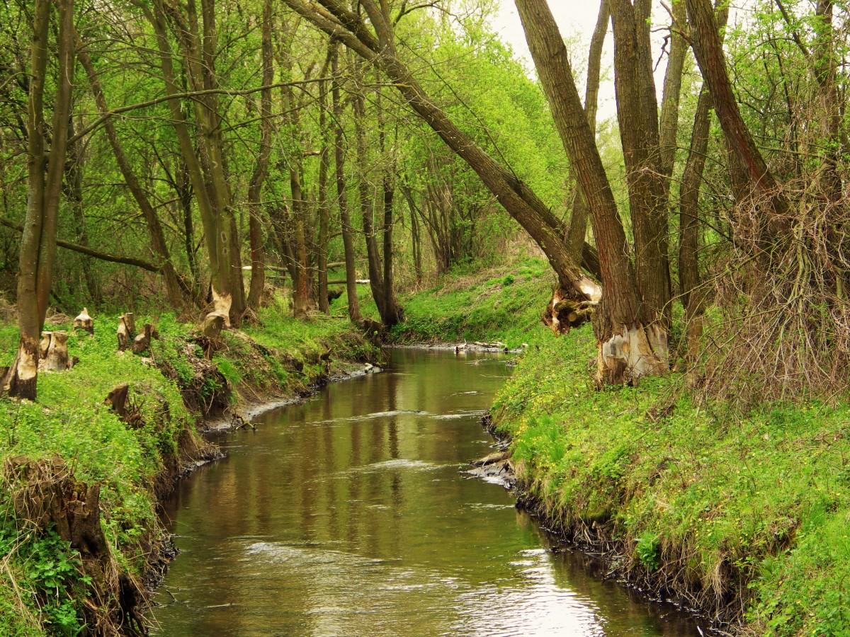 images gratuites eau for t ruisseau piste rivi re canal courant jungle paysage voie. Black Bedroom Furniture Sets. Home Design Ideas