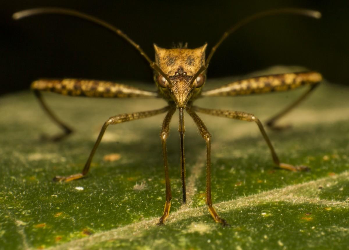 Комары картинки фото