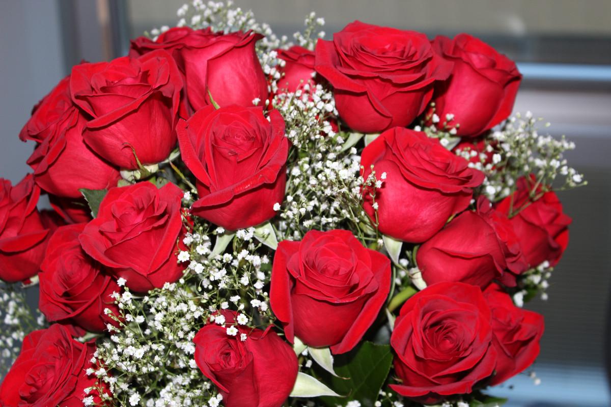 kostenlose foto blume bl tenblatt liebe rot romantik rosa valentine floristik. Black Bedroom Furniture Sets. Home Design Ideas
