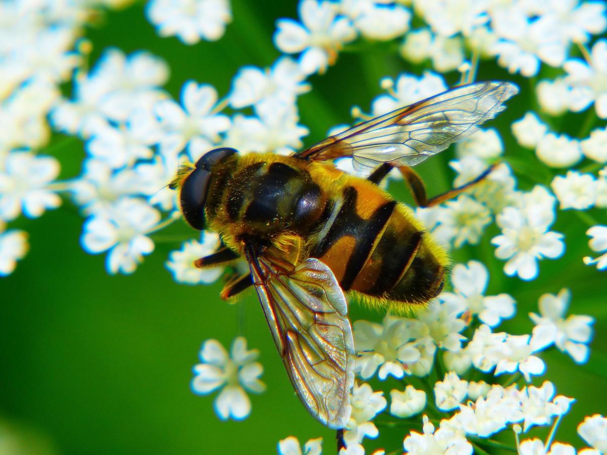 Новогодние, картинка с пчелами