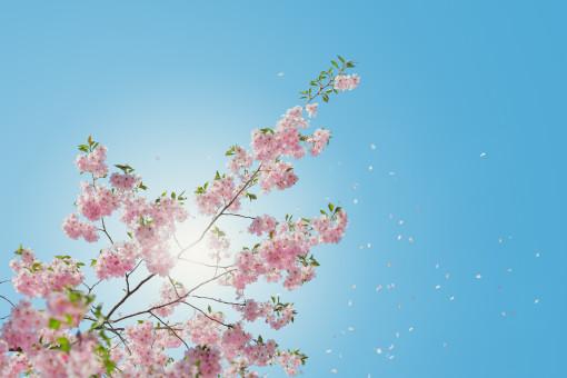 木,ブランチ,花,工場,空,葉