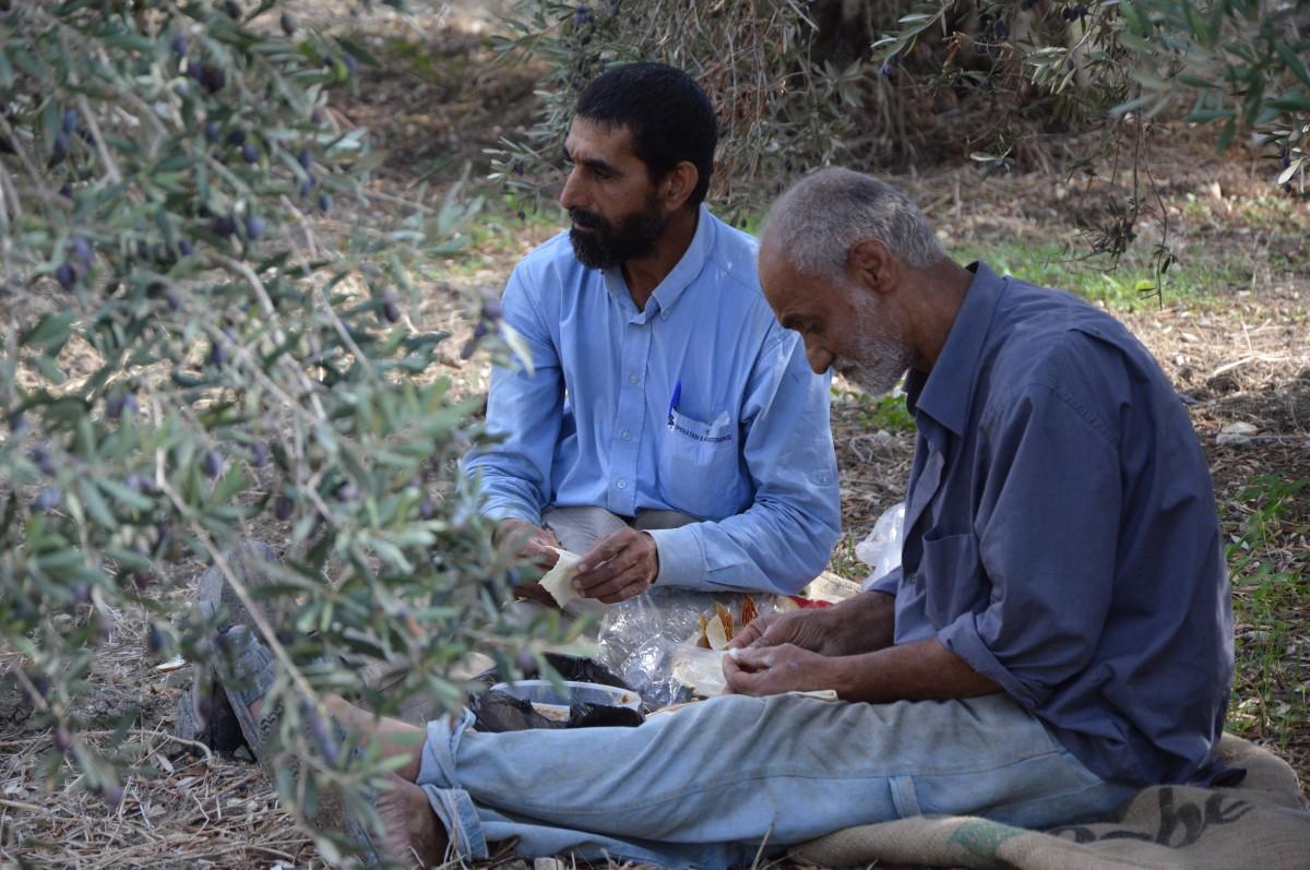 Menschen, Ernte, Hilfe, Unterbrechung, Oliven, Flüchtlinge, Asyl, Libanon, Syrien, Kostenlose foto In PxHere