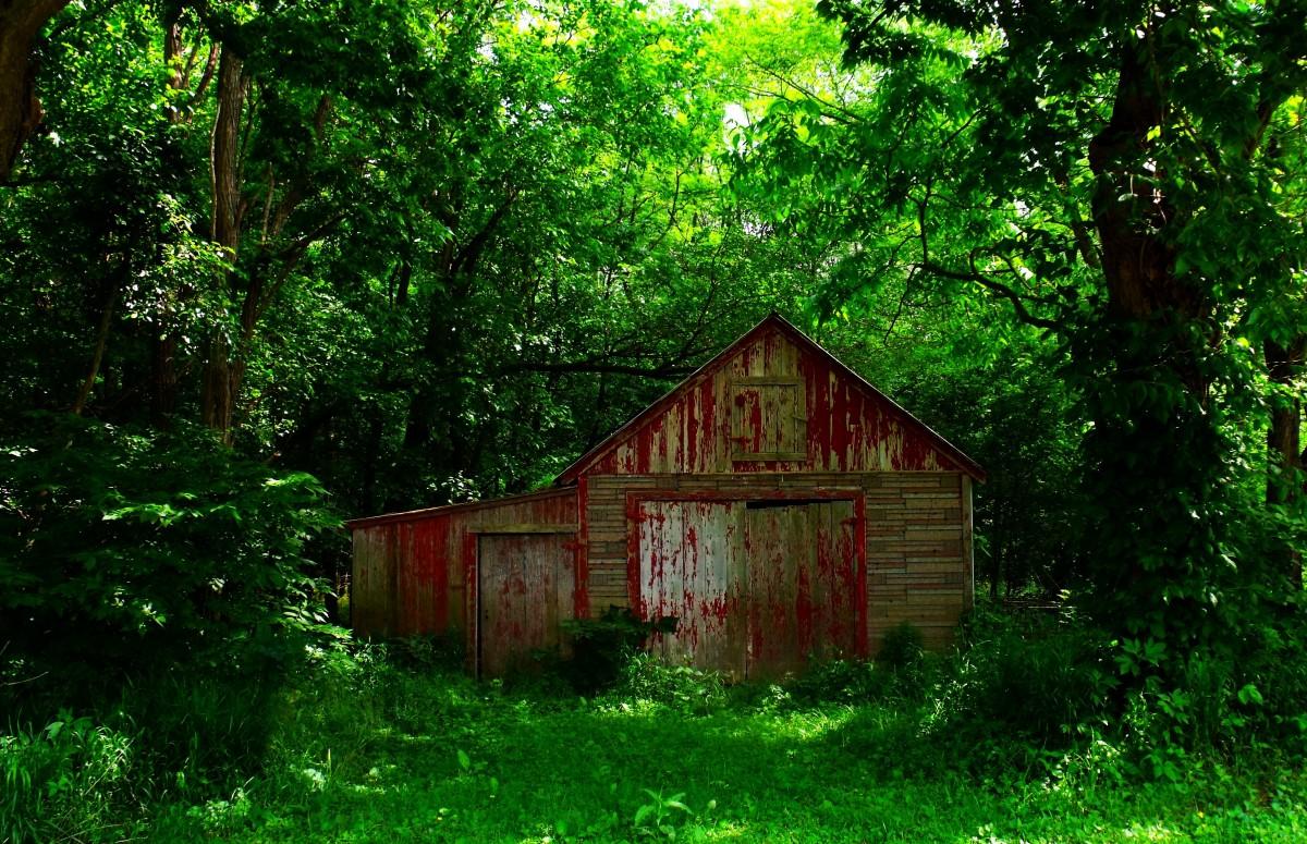 free images tree nature forest farm vintage antique. Black Bedroom Furniture Sets. Home Design Ideas