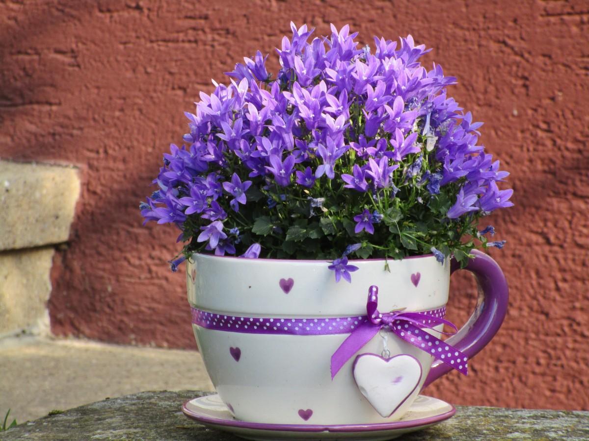 planta flor púrpura vaso corazón decoración jardín decoración lavanda Deco Flores Violeta maceta jacinto planta floreciendo Planta de tierra