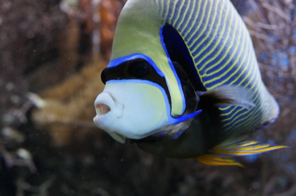 Free Images : wildlife, underwater, fauna, aquarium, tropics, salt water, macro photography ...