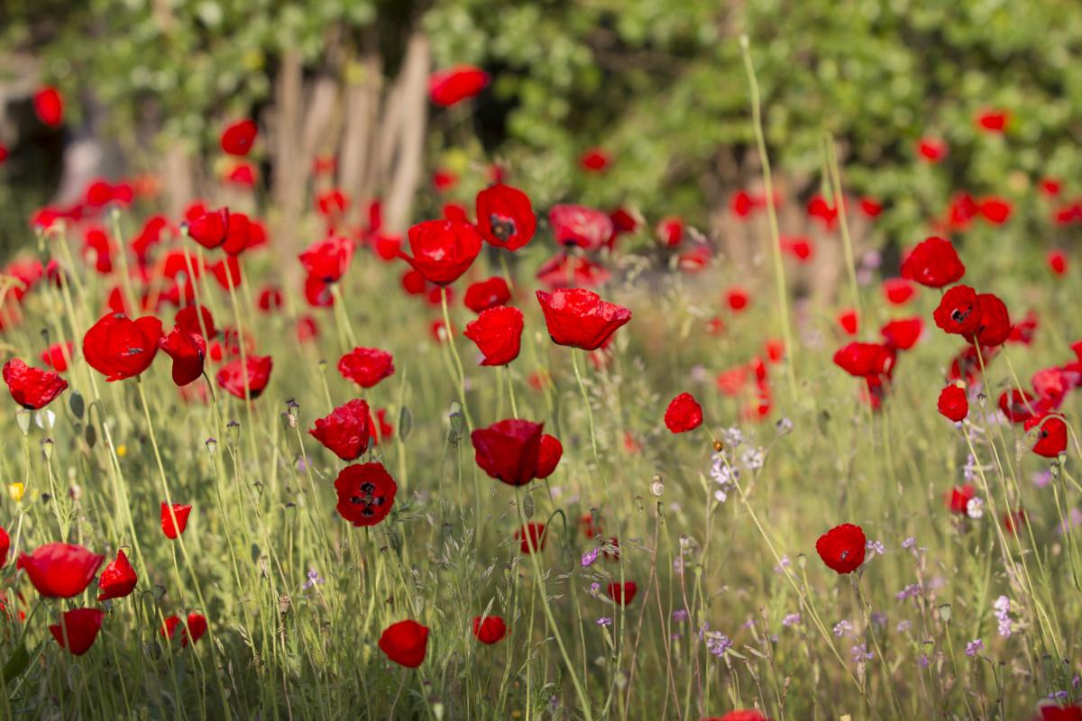 Неприхотливые цветы для сада и фото